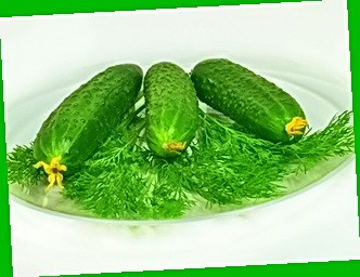 Огурцы - огурец алекс выращивание семян огурцов самоопыляемы.
